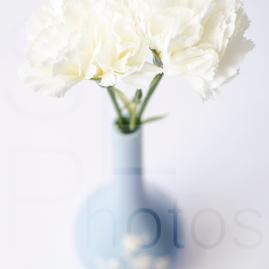 Spode Flower